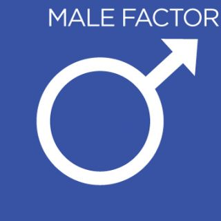Male Factor